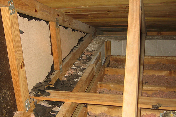 Damage Caused By Raccoons In The Attic Photographs