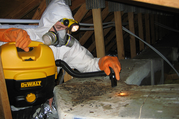 Rat Feces In The Attic How To Identify And Clean