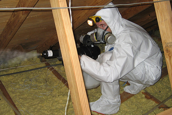 Animals In The Attic Humane Removal Of Wildlife In The