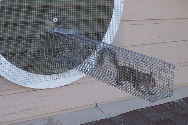 Squirrel Bait What Is The Best Bait To Catch Squirrels