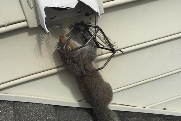 How To Kill Squirrels Does Poison Work